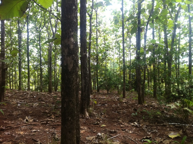 Teak Farm for Sale in Tulin
